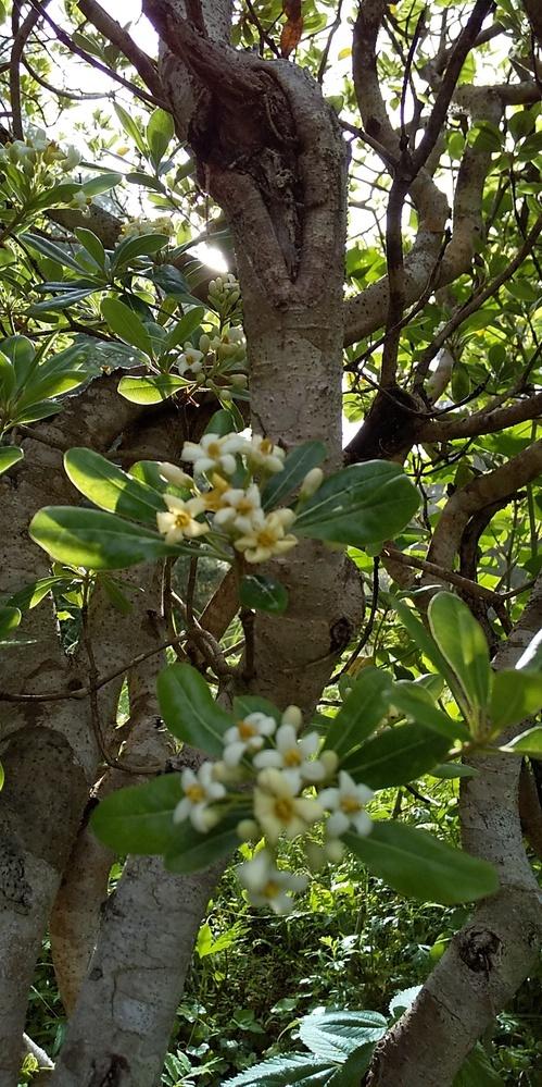 この木の名前は何ですか?宜しくお願いします。