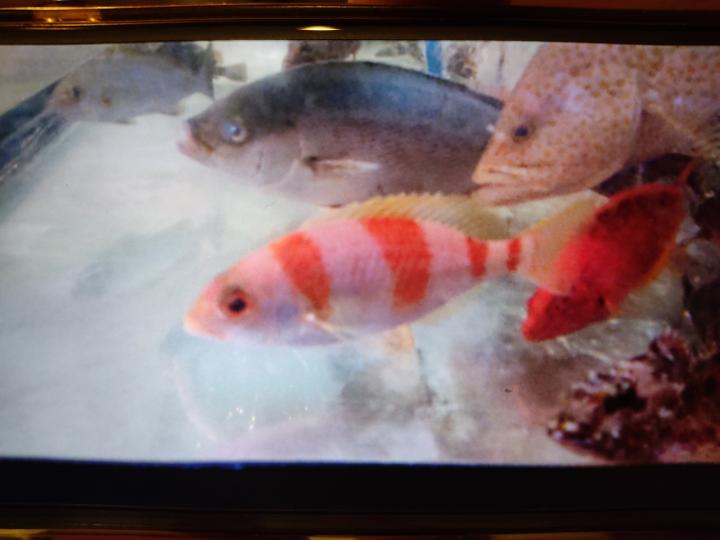 一番手前の 紅白のお魚は 何と言う魚でしょうか? 宜しくお願いします。
