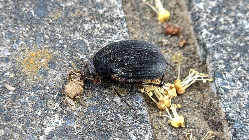 この虫はなんですか? 1~2cmくらいです。