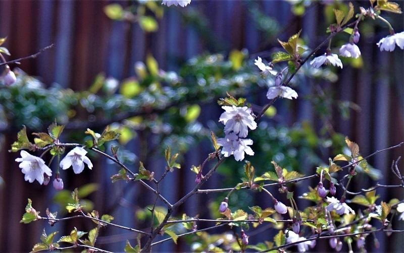 この花の名前を教えて下さい」。