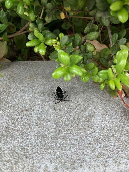 この昆虫はなんですか?