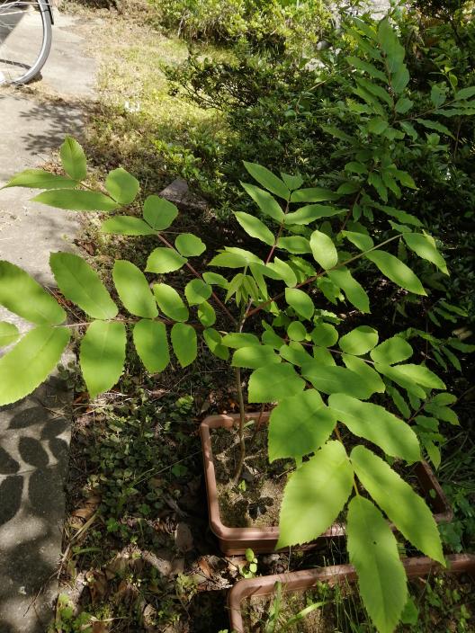 これは何の木ですか?詳しい方教えて下さい。
