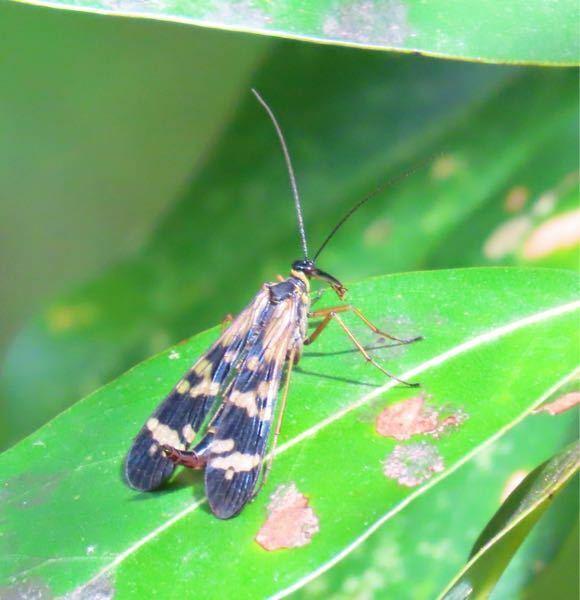 昆虫の種類 写真の昆虫について 種類が分かる方、ご教示ください。 昨日福岡県で撮影したものです。