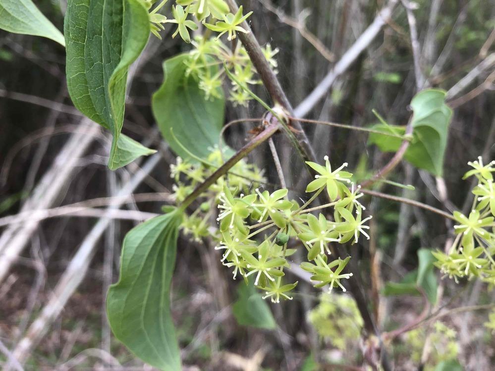 那須の林で見かけた花です。 この花(?)の名前を教えて下さい。 よろしくお願いします。
