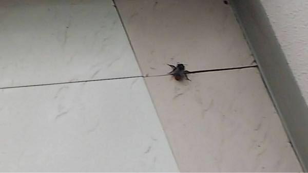 この虫が何かわかる方教えてください。