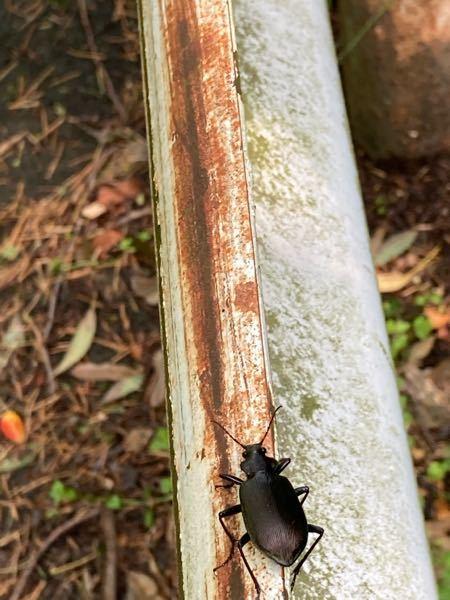 この季節山でよく見かけるこの虫はなんですか?