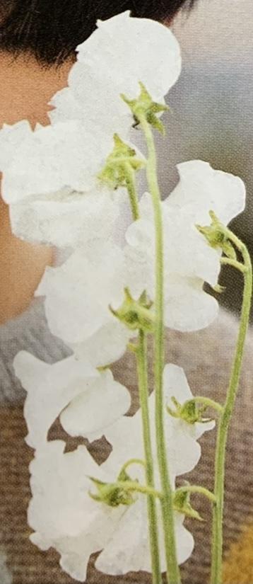 この花の名前を教えていただけないでしょうか? ご存知の方よろしくお願いします。