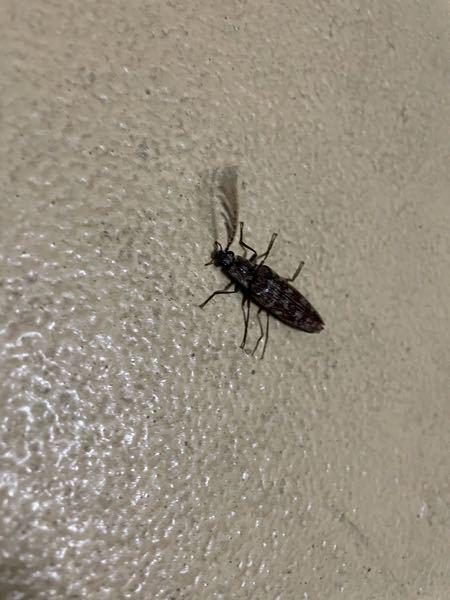 この虫ってなんで言う虫ですか?