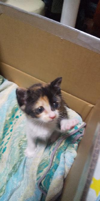 この猫生後いくつぐらいですか?