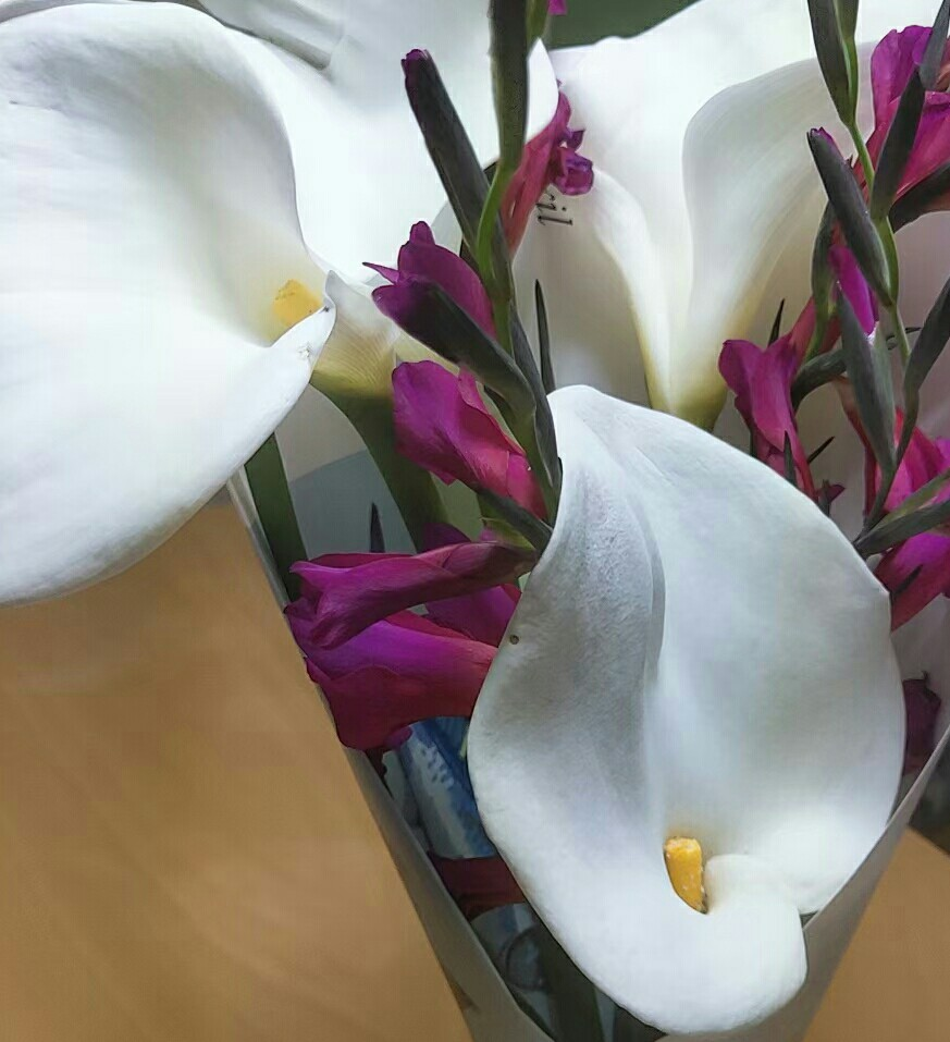 〜花の名前が知りたい〜 お世話になります。 何という花でしょうか?