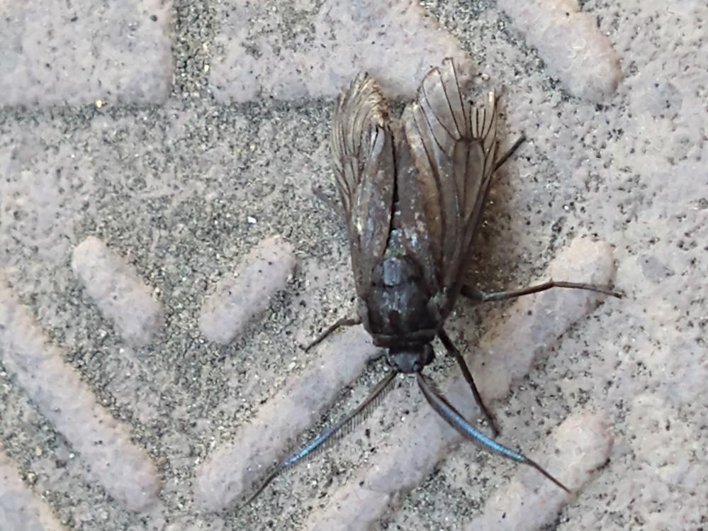 この虫の名前教えて下さい