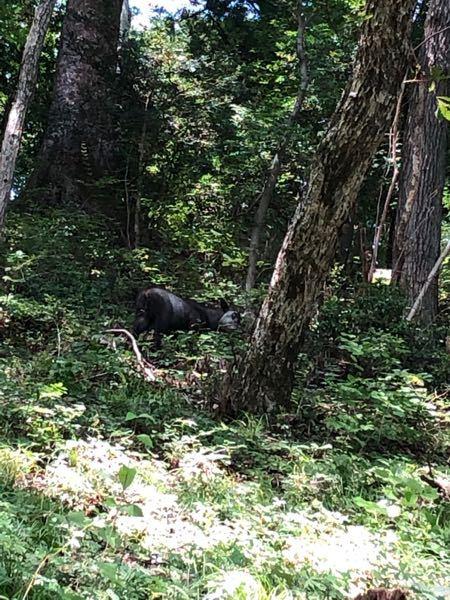 この写真に写っている真ん中の動物って何だと思いますか?以前ハイキングに行った際に動物を見かけて自分自体東京に住んでいるもので野生の動物を見る機会がなかったんですけど... そこでレアだなぁと思って写真を撮りました後はと写真の整理をしてる中でこの動物の写真が6枚ぐらい出てきたんだけど何の動物のかなあって今になって気になったので質問させていただくことにしました。