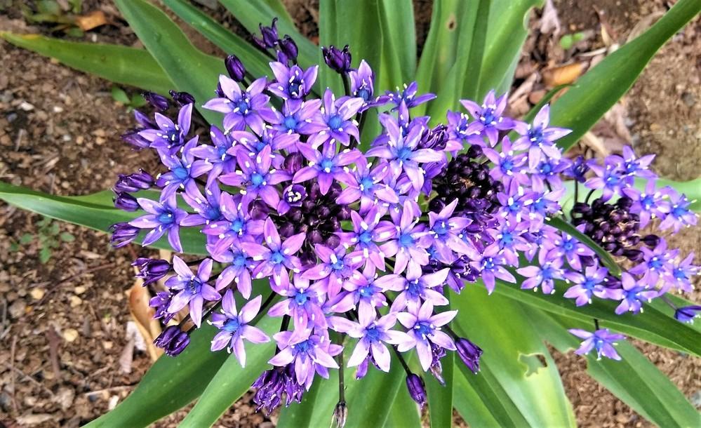 この花の名前を知りたいのですが よろしくお願いします