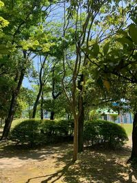 樹木の名前がわかる方、教えて下さい。 サルスベリのように幹がツルツルで大変滑らかです。 葉は小さめでした。 東海地方の公園内で、5m以上あったと思います。 中央の細めの株立ちのものです。