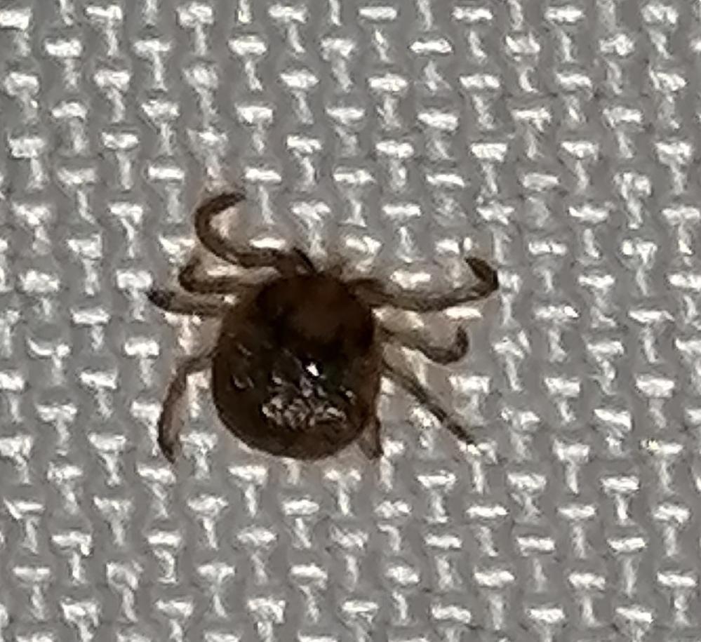 この虫は何という虫でしょうか? 宜しくお願い致します。