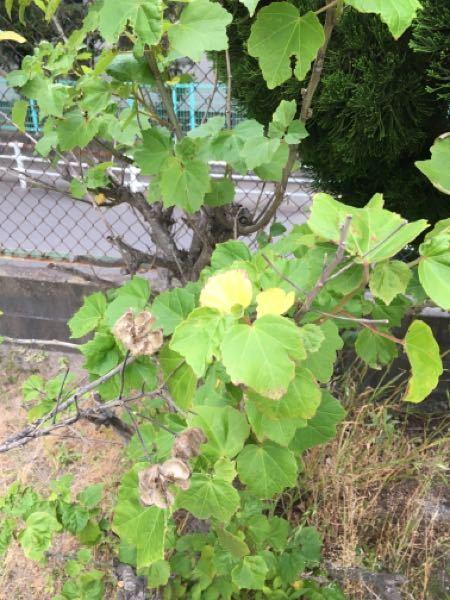 添付写真の樹木の名前は分かりますか? よろしくお願いします。