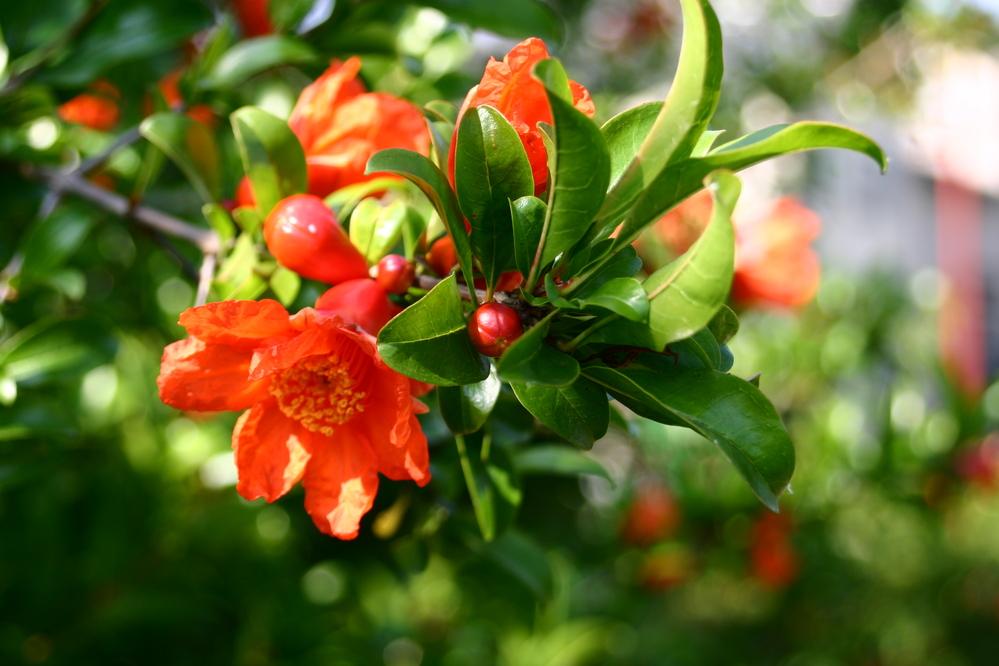 いろいろ調べたのですが、なかなか見つかりません。 この花の名前をご存じの方がいらっしゃったら、教えていただけますか? 宜しくお願い致します。