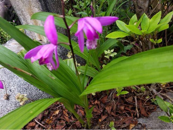 この花、なんて言う名前ですか?