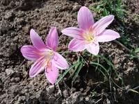 この花は?  九州北部にて、先週の画像です。  この花は何という植物でしょうか?