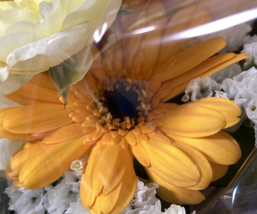 このお花はなんの花ですか? ガーベラ?
