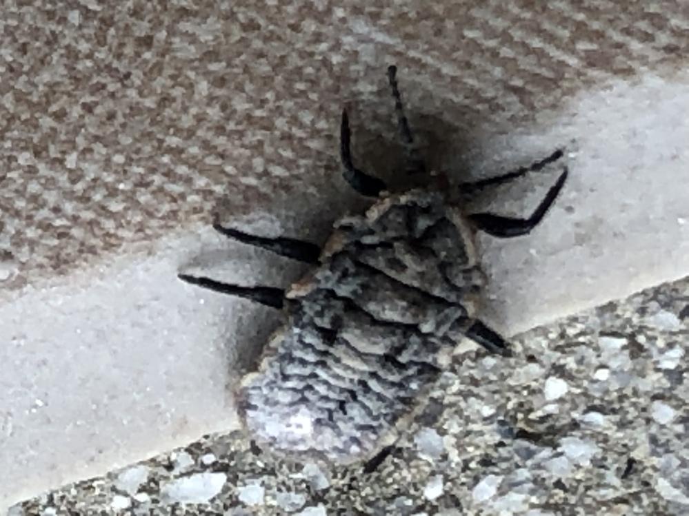 この虫がわかる方お願いします。 大量発生して困ってます。