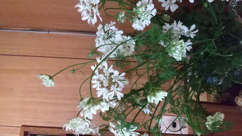 花の名前がわかりません