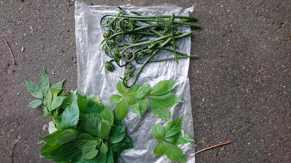 こちらの山菜の名前と調理法を教えて下さい。 よろしくお願い致します。