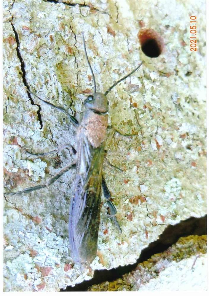 教えて下さい、この昆虫、3cmくらい、は何というのでしょうか?