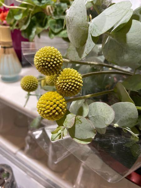 この丸い実?花?種?この植物の名前を教えてください。