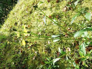 この花は何という名前でしょうか。 空き地に咲いていたので雑草だとは思いますがタンポポより丈が高いようです。