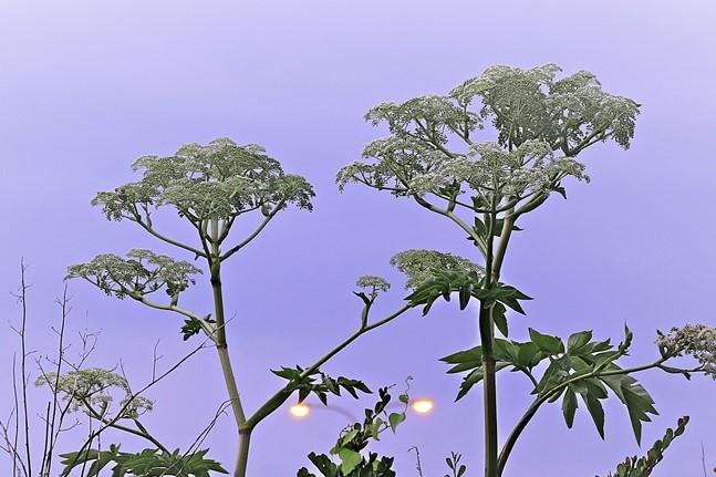 すみません!この植物の名前を教えてください。