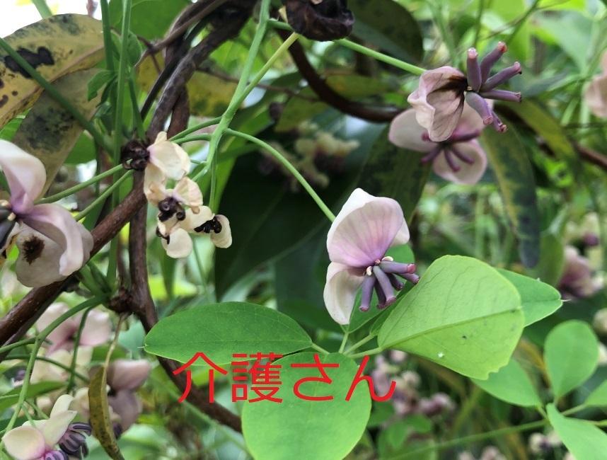 この花の名前は何ですか? 撮影日時は2021年4月4日、撮影場所は兵庫県です。 よろしくお願いします。