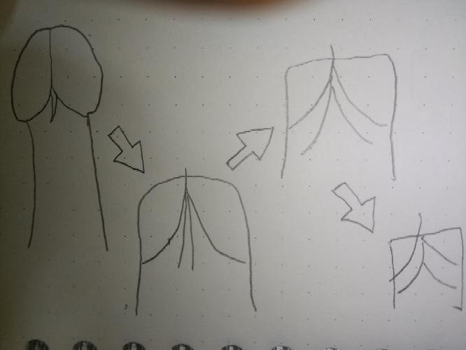 漢字の成り立ちは正しいですか?