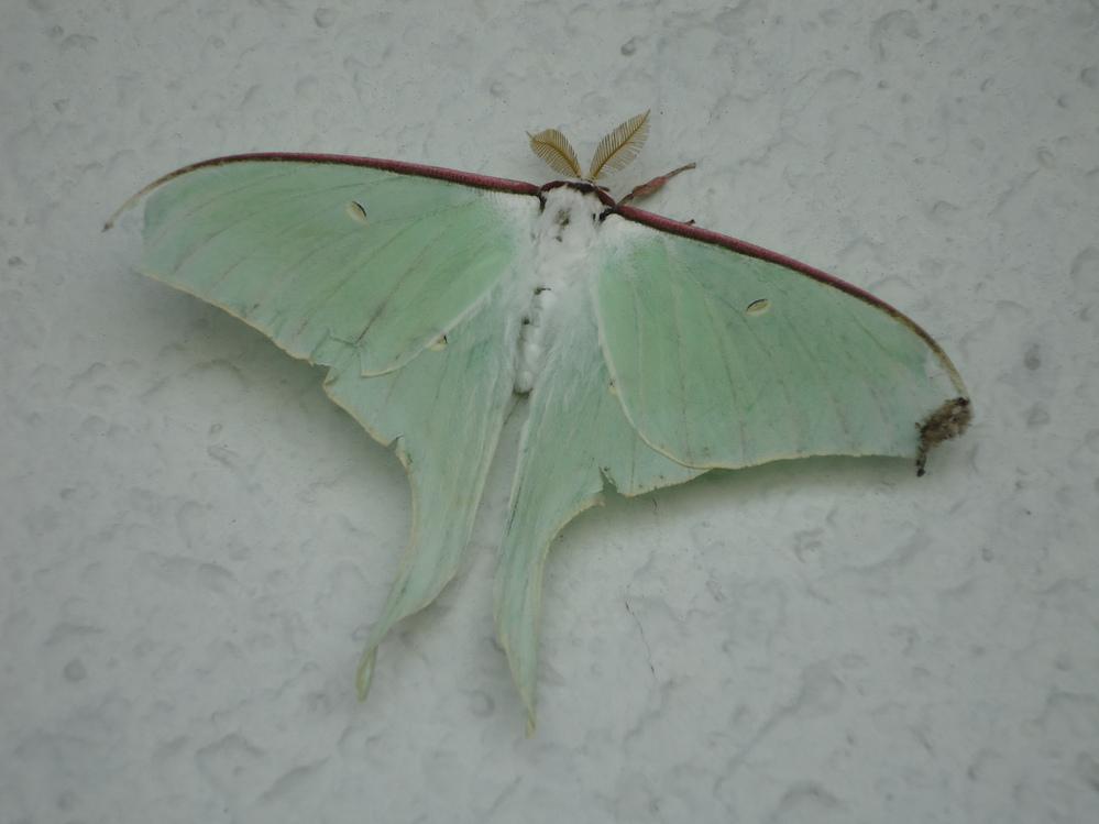 この生物の名前を知っていたら教えて下さい。