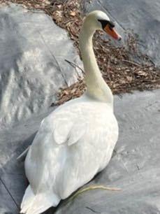 この鳥って何て言う鳥ですか? 画質悪くてすみません。