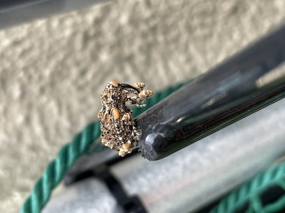 この虫、何ですか? 触っても大丈夫ですか?
