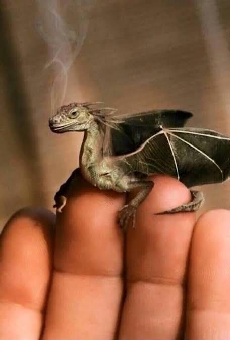 ドラゴンの飼い方を教えてください