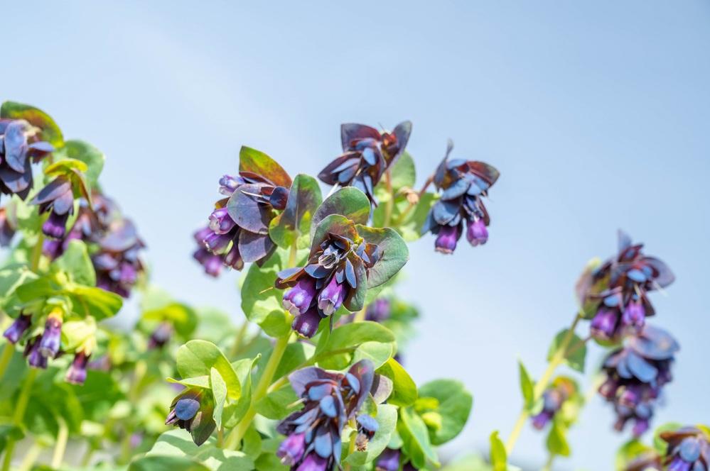 この花の名前がわかる方は教えて下さい。 キャットミントやセージなどが植わっている花壇にありました。 よろしくお願いいたします。