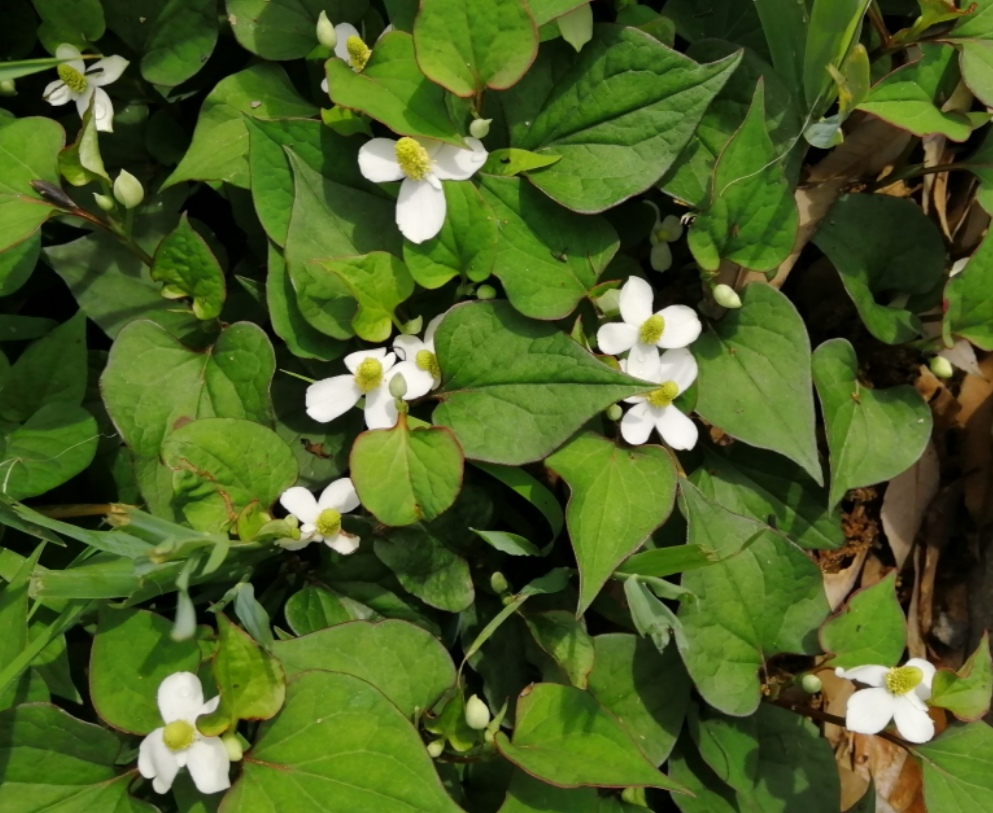 野原に咲いているのをよく見る花なのですが、名前がわかりません。 ご存知の方がいらっしゃいましたらお教え下さい!