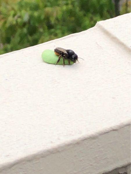 画像が荒くてわかりづらいかもしれませんが、 こちらの蜂の名前と、危険性を教えて頂けませんか? 最近ベランダに10匹くらい飛び回って巣を作っている感じでどうしようか悩んでいます。 駆除スプレー等はあるんですが、危険性が無いなら駆除せずに作っているところに吹き掛けておこうと思うのですが。 対策等もあればよろしくお願いします!