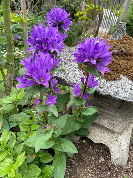 この花の名前がわかる方いますか? もしよろしければ教えてください よろしくお願いします