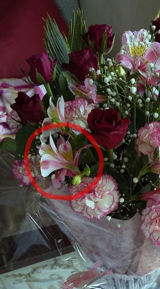 ちょっと分かりづらいのですが、この花の名前は何でしょうか? 赤いマルで囲った花です。