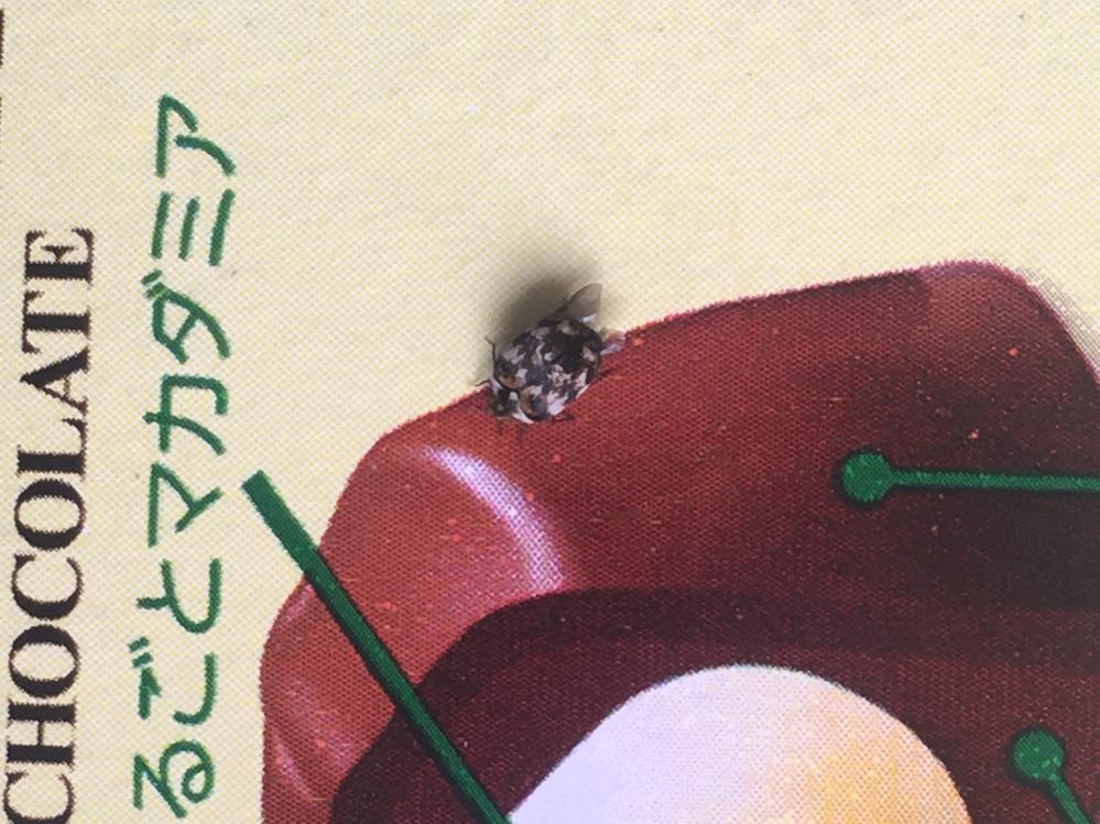 この虫けら、何という名前で何を餌にしていますか? 北海道の自宅に大量発生していて気持ち悪いです。駆除したいのですがどこから湧いてくるやら。助けてください。