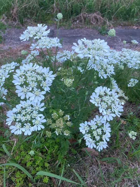 この花は何ですか? ウォーキング途中、堤防で見かけました。