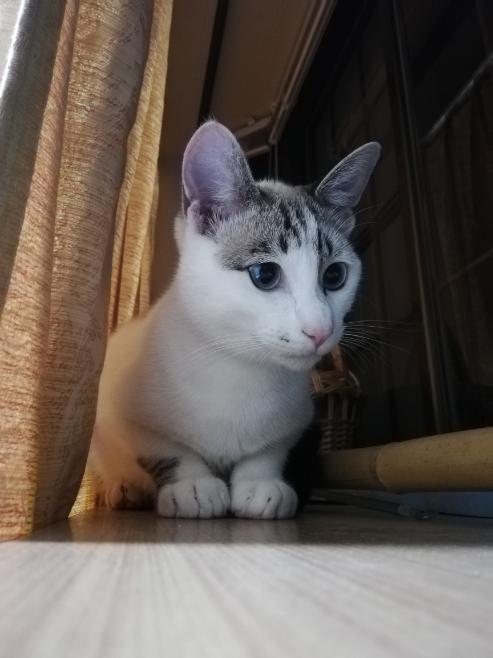 飼い猫の種類を知りたいです。 去年の夏、捨て猫として見つかった猫を我が家で保護し、現在も飼っています。 僕自身まだ中学生で、猫に対して無知なところも多いのですが、この色(?)というか顔の感じが今まで見たことない感じの猫だったので、ハーフかな?と思ったりもしています。 詳しい方いらっしゃいましたら是非教えてください! 余談ですが名前は小豆(こまめ)って言います!