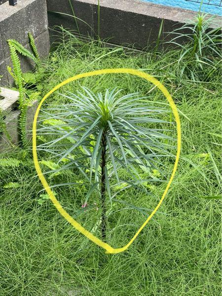 雑草の名前 【雑草の名前】 こちらの雑草の種類がわかる方、いらっしゃいましたらお願いします。