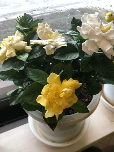 この花 なんと言う花か? 教えて下さい! よろしくお願いします。