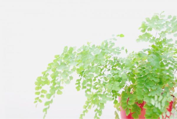 これは何という観葉植物でしょうか。
