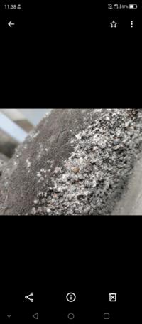 この、コンクリート塀にいる赤い虫は、なんて虫ですか?