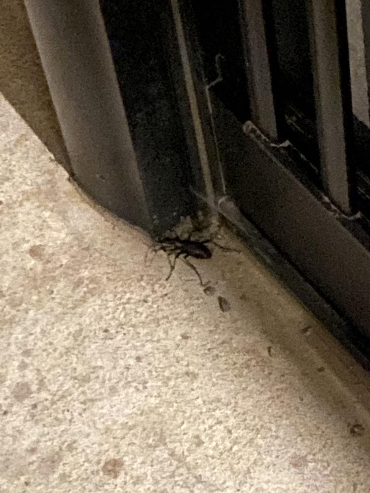 北海道に住んでるのですがこの虫はなんですか? クワガタ?クモ?